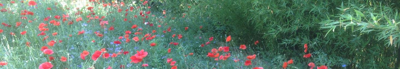 Prairie fleurie - Jardins Méditerranéens